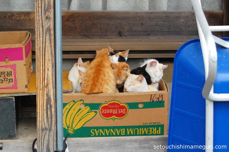 男木島の猫たち(2013年)