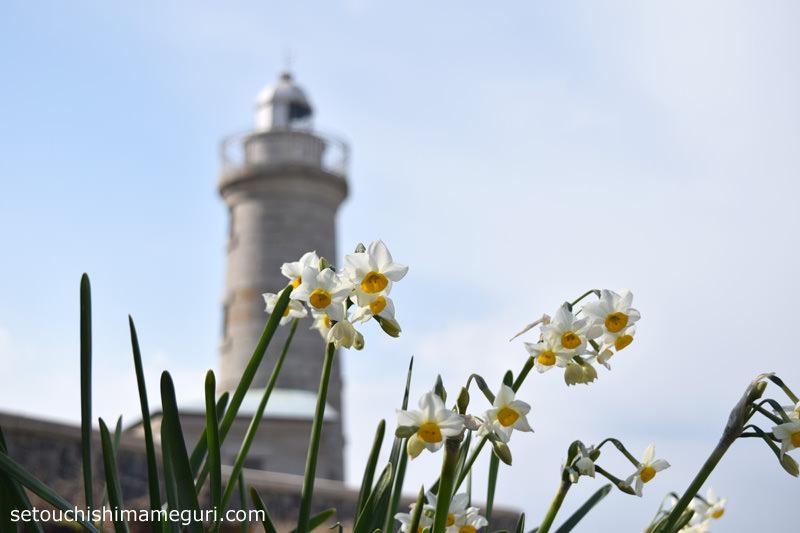男木島灯台とスイセン