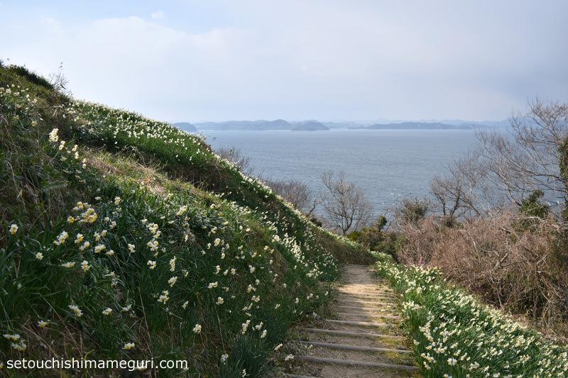 男木島 第2水仙郷