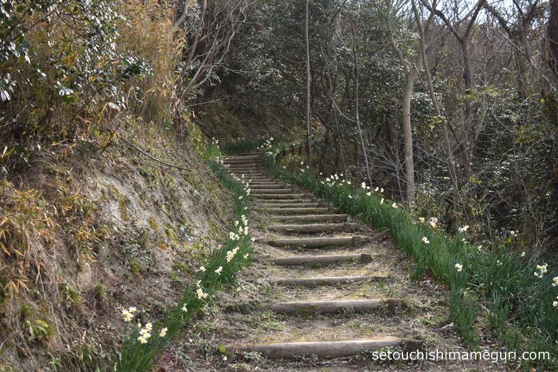 男木島 山道に咲くスイセン