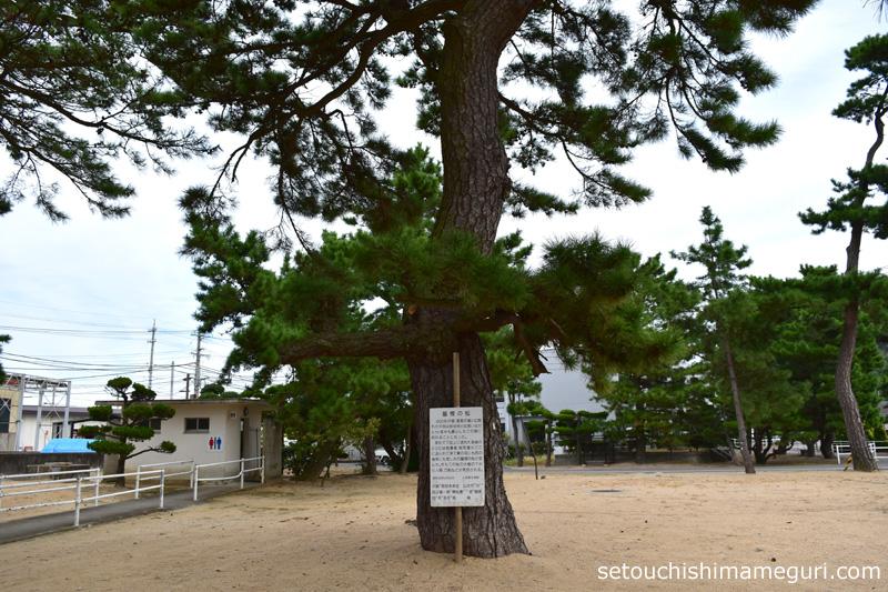 大島 墓標の松