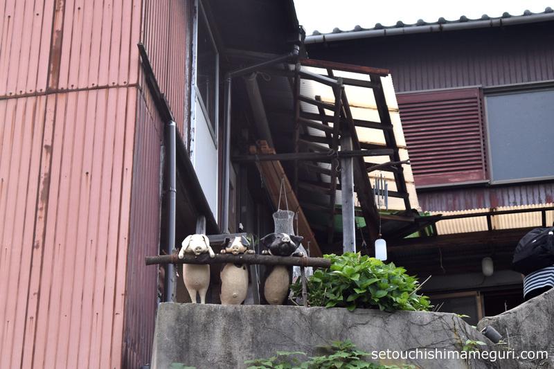高見島 民家の庭にいる子豚たち